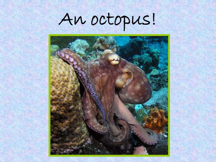 An octopus!