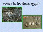 what is in these eggs1