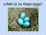 what is in these eggs6