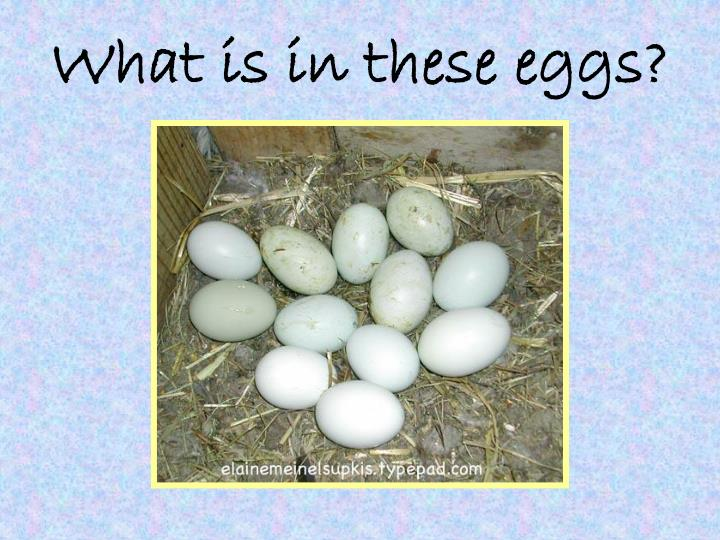 What is in these eggs?