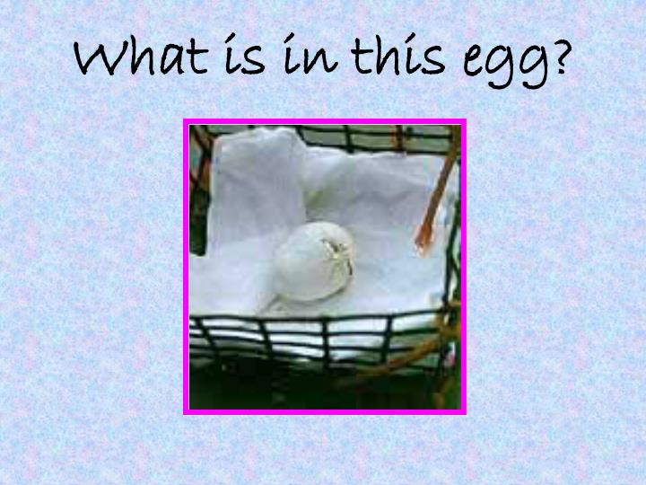 What is in this egg?