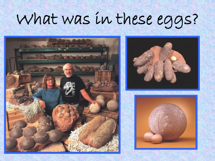 What was in these eggs?