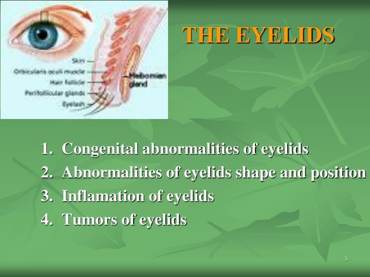 THE EYELIDS
