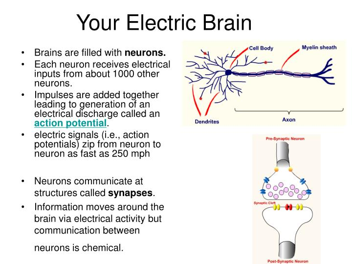 Your Electric Brain