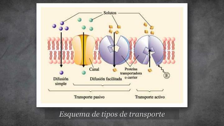 Esquema de tipos de transporte