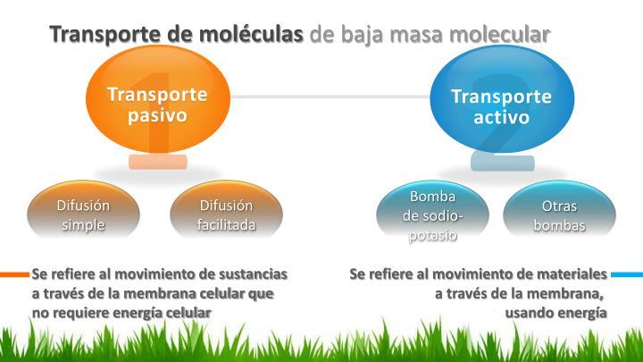 Transporte de moléculas