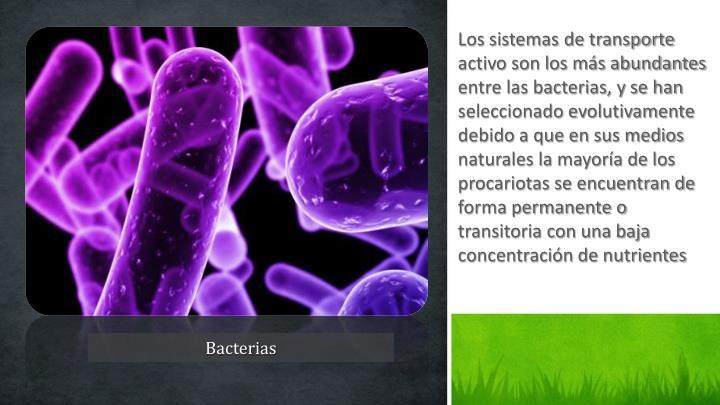 Los sistemas de transporte activo son los más abundantes entre las bacterias, y se han seleccionado evolutivamente debido a que en sus medios naturales la mayoría de los procariotas se encuentran de forma permanente o transitoria con una baja concentración de nutrientes
