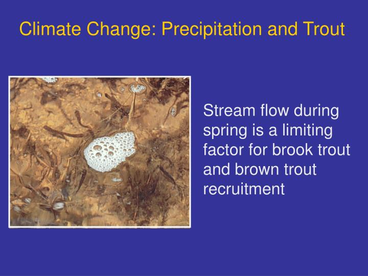 Climate Change: Precipitation and Trout