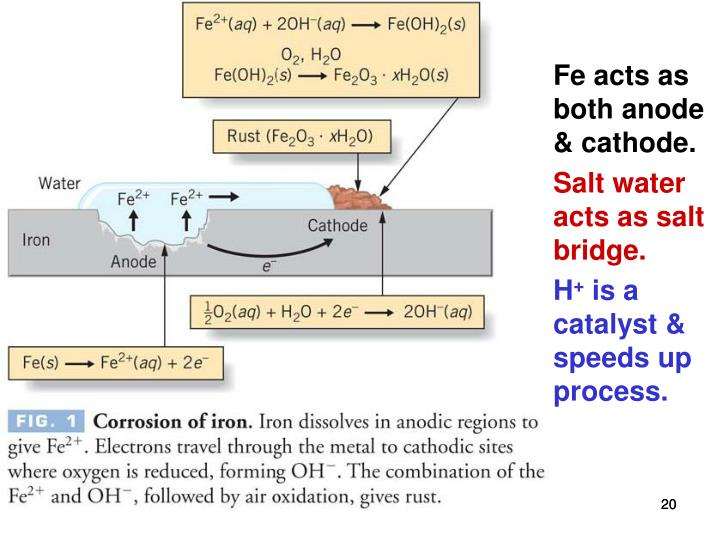 Fe acts as both anode & cathode.