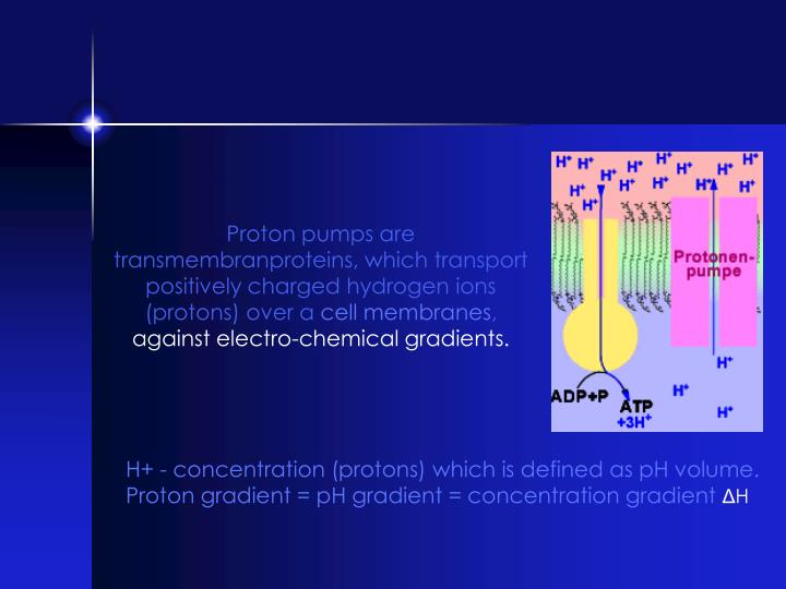 Proton pumps are transmembranproteins, which transport positively charged hydrogen ions (protons) over a