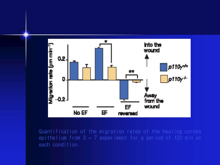 Quantification of the migration rates of the healing cornea epithelium from 3