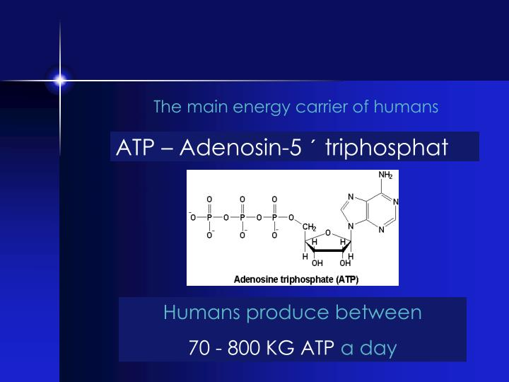 The main energy carrier of humans