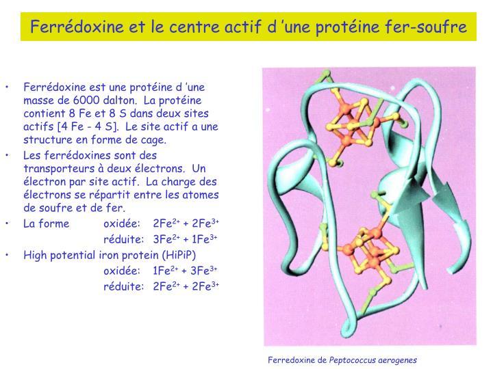 Ferrédoxine et le centre actif d'une protéine fer-soufre