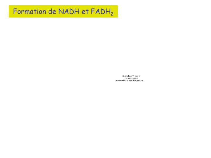 Formation de NADH et FADH