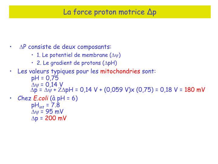 La force proton motrice ∆p