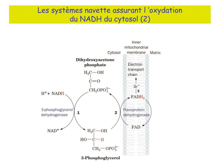 Les systèmes navette assurant l'oxydation