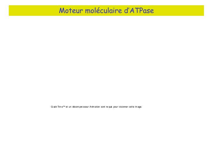 Moteur moléculaire d'ATPase