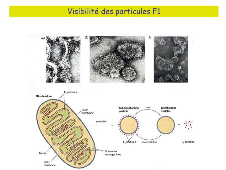 Visibilité des particules F1