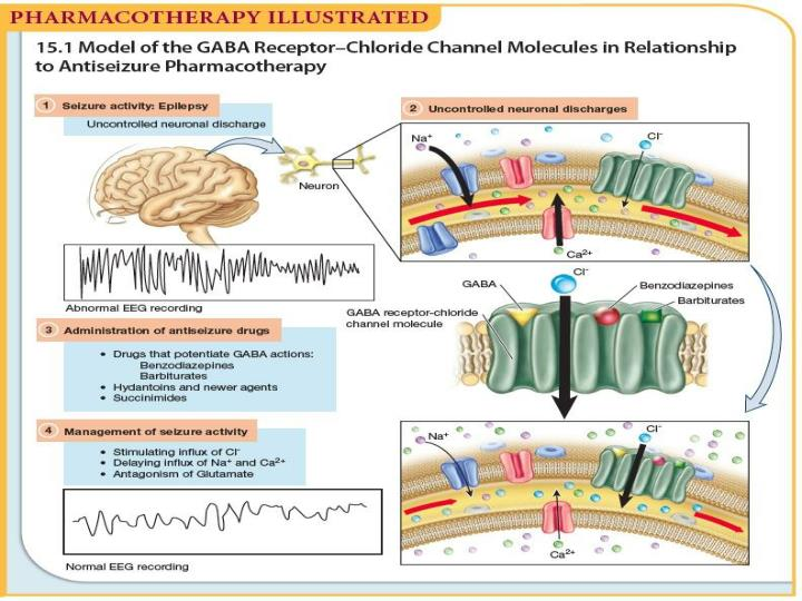 Pharmacotherapy Illustrated: Model of the GABA Receptor–Chloride Channel Molecules in Relationship to Antiseizure Pharmacotherapy