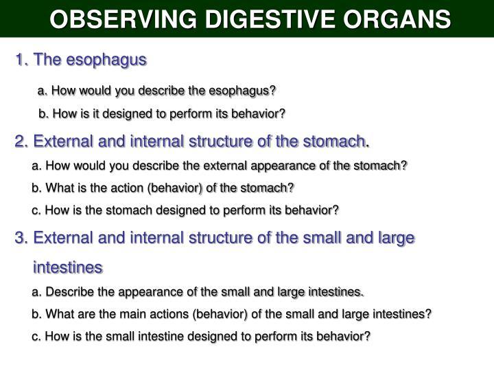 OBSERVING DIGESTIVE ORGANS