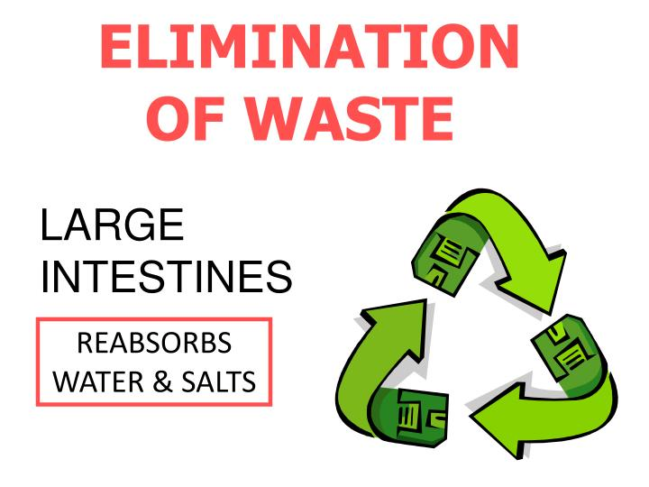 ELIMINATION  OF WASTE