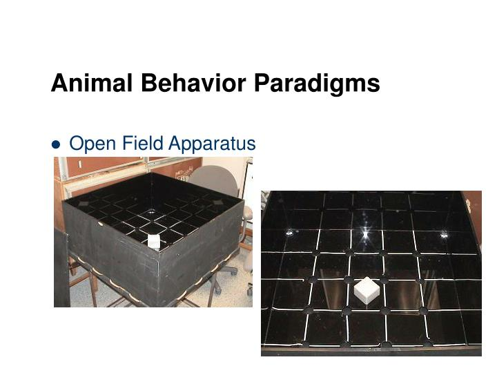 Animal Behavior Paradigms