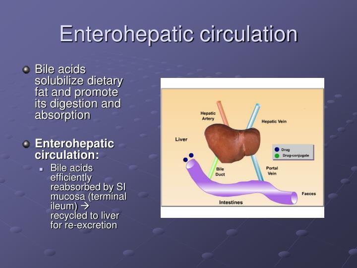 Enterohepatic circulation