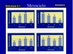 mesociclo10