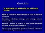 mesociclo12