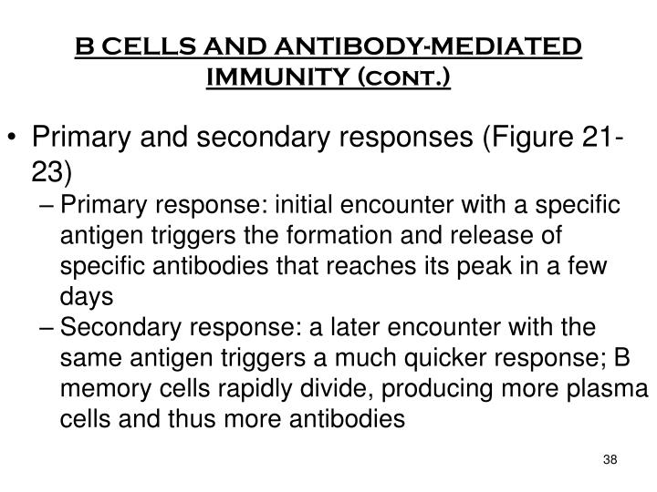 B CELLS AND ANTIBODY-MEDIATED IMMUNITY (cont.)