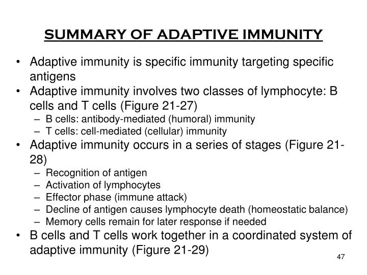 SUMMARY OF ADAPTIVE IMMUNITY