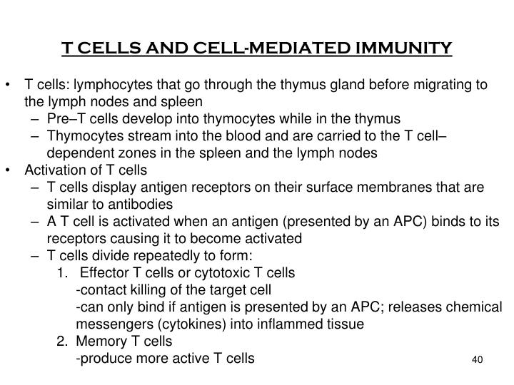 T CELLS AND CELL-MEDIATED IMMUNITY