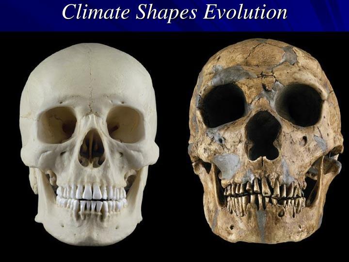 Climate Shapes Evolution