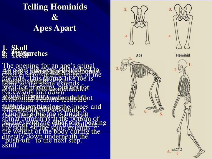 Telling Hominids