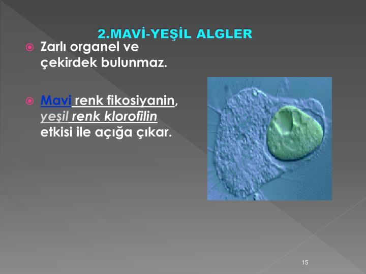 2.MAVİ-YEŞİL ALGLER