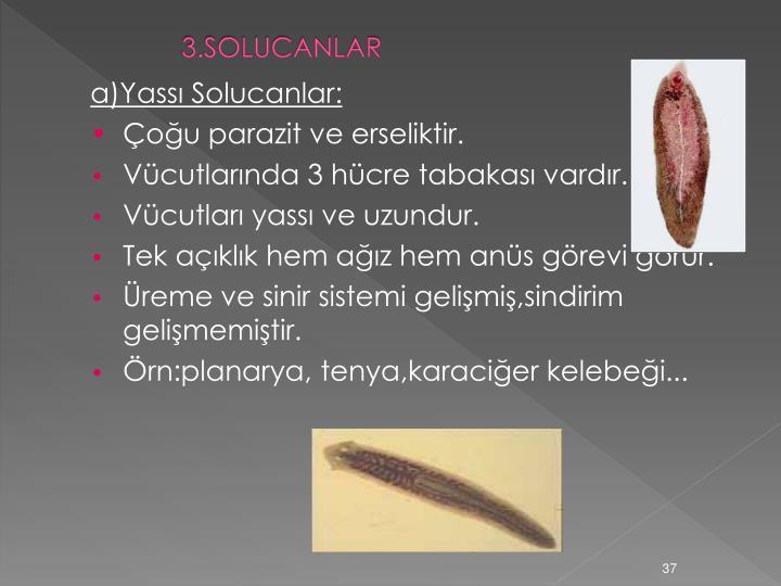 3.SOLUCANLAR