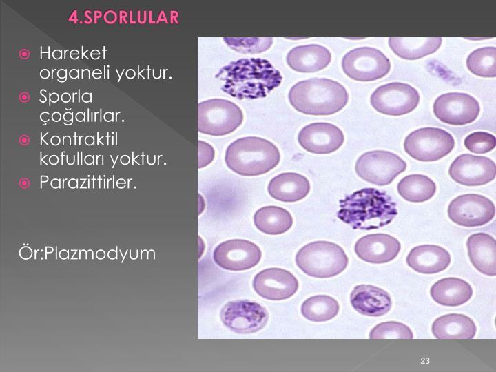 4.SPORLULAR