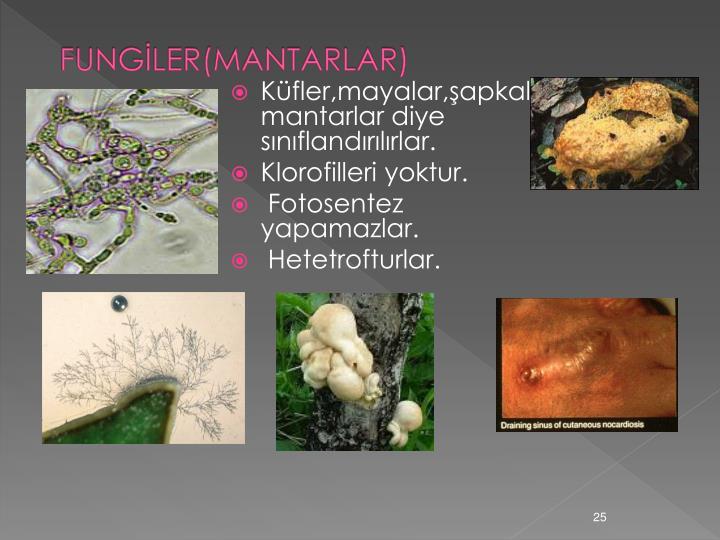FUNGİLER(MANTARLAR)