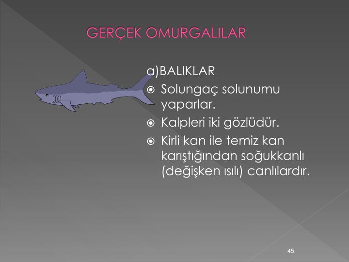 GERÇEK OMURGALILAR