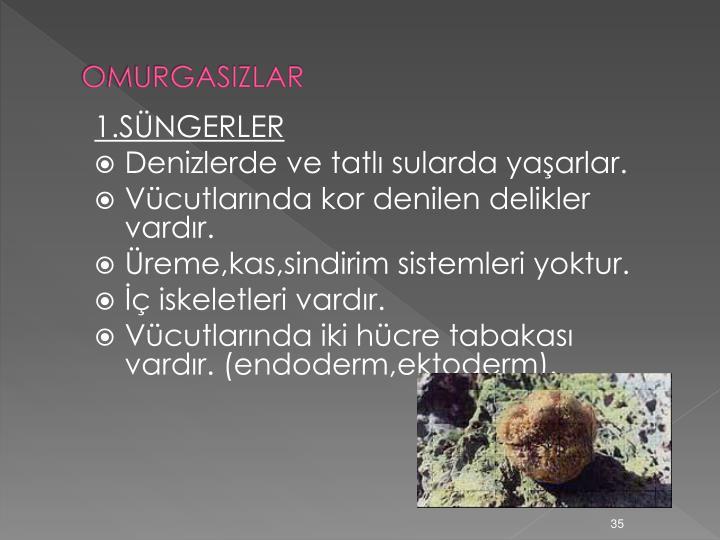 OMURGASIZLAR