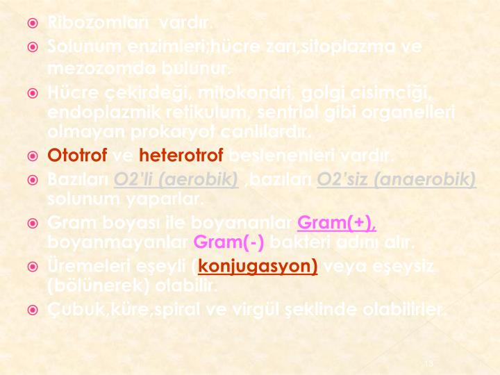 Ribozomları  vardır.