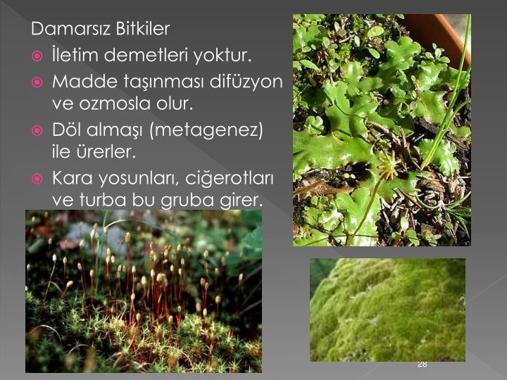 Damarsız Bitkiler