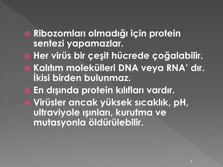 Ribozomları olmadığı için protein sentezi yapamazlar.