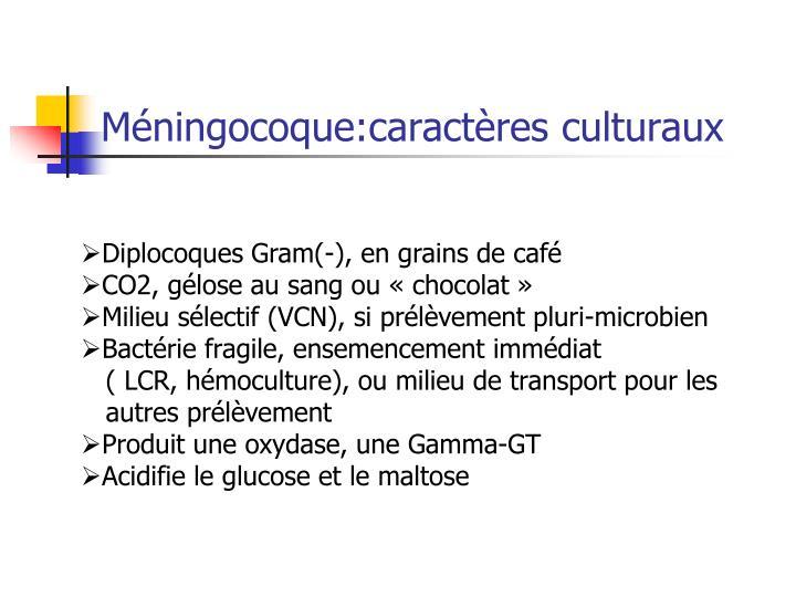 Méningocoque:caractères culturaux