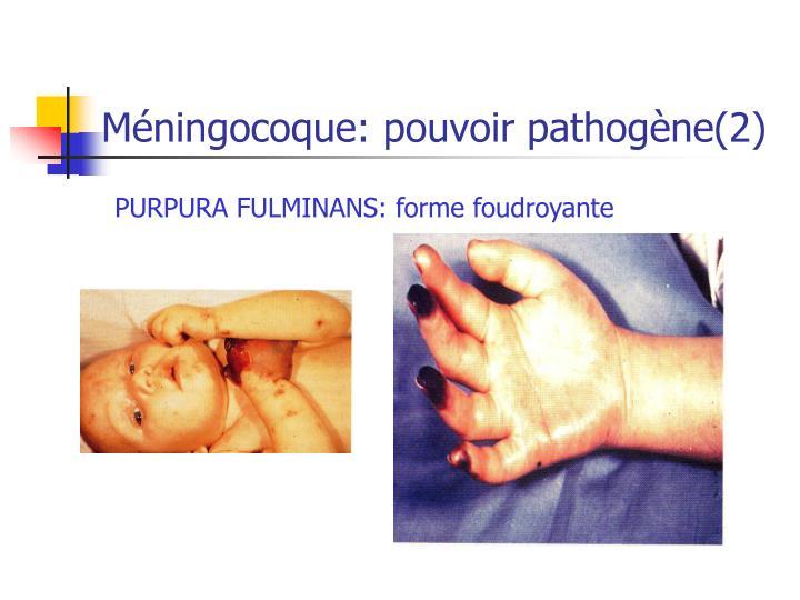 Méningocoque: pouvoir pathogène(2)