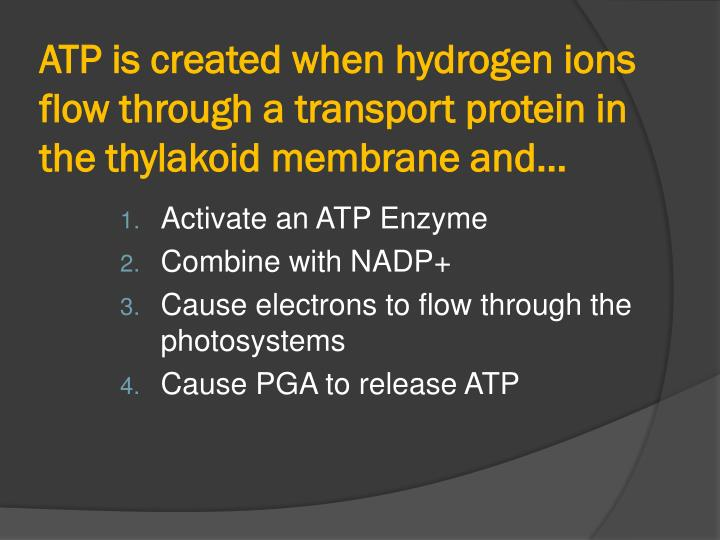 ATP is created when hydrogen ions flow through a transport protein in the