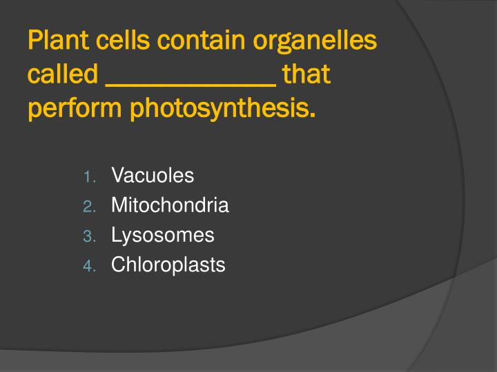 Plant cells contain organelles called ____________ that perform photosynthesis.