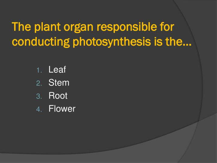 The plant organ responsible for conducting photosynthesis is the