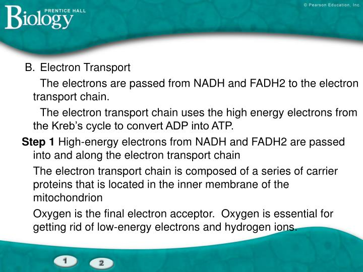 B.Electron Transport