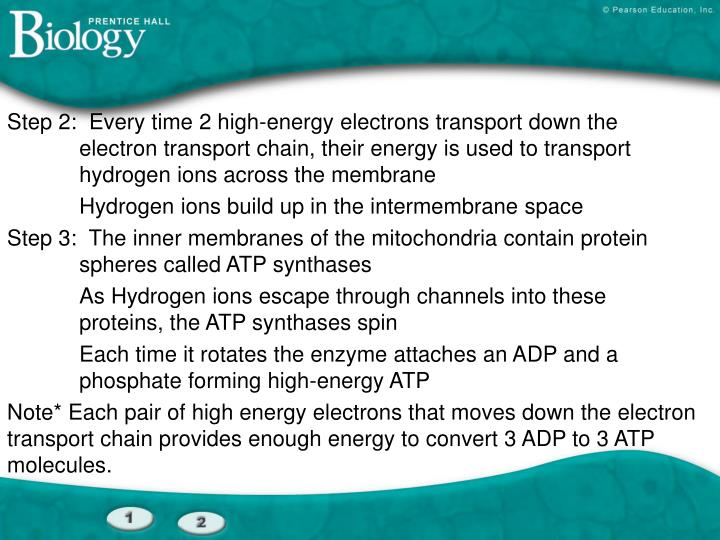 Step 2:  Every time 2 high-energy electrons transport down the 		electron transport chain, their energy is used to transport 		hydrogen ions across the membrane